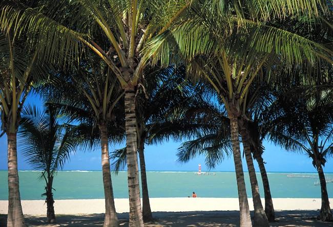 boipeba-beach-bahia-brazil-coconut