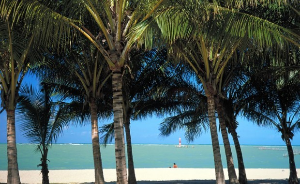boipeba-beach-bahia-brazil-coconut[1]
