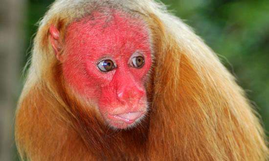 Amazon Florest animals Brazil