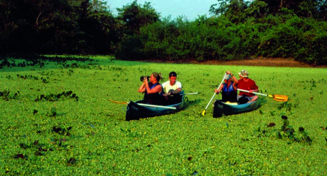 Pantanal Attractions Brazil