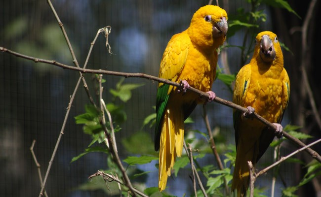 the bird park in Iguazu